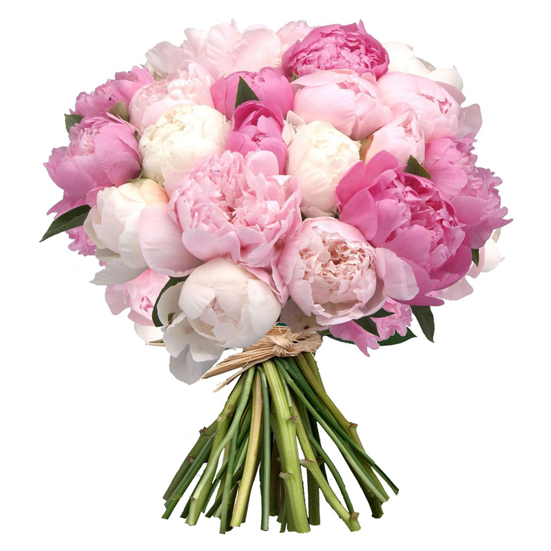 Bouquet of 23 Peony - Bloom de Fleur - Bouquets, flowers, order and ...